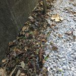 防草砂利と落ち葉掃除