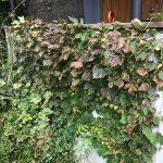 台風の塩害と落葉